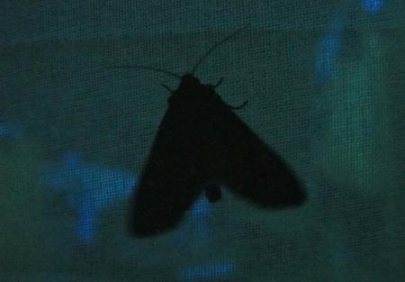moth_6694