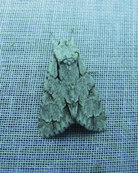 moth_6776