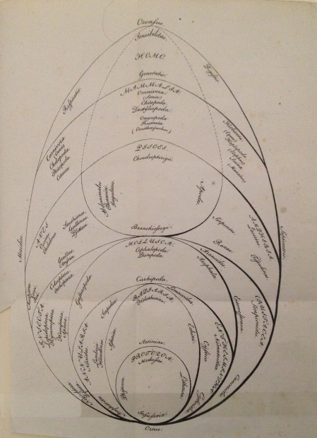 System of the Animals, Georg August Goldfuss. Ueber die entwicklungsstufen des thieres, Nurnberg 1817